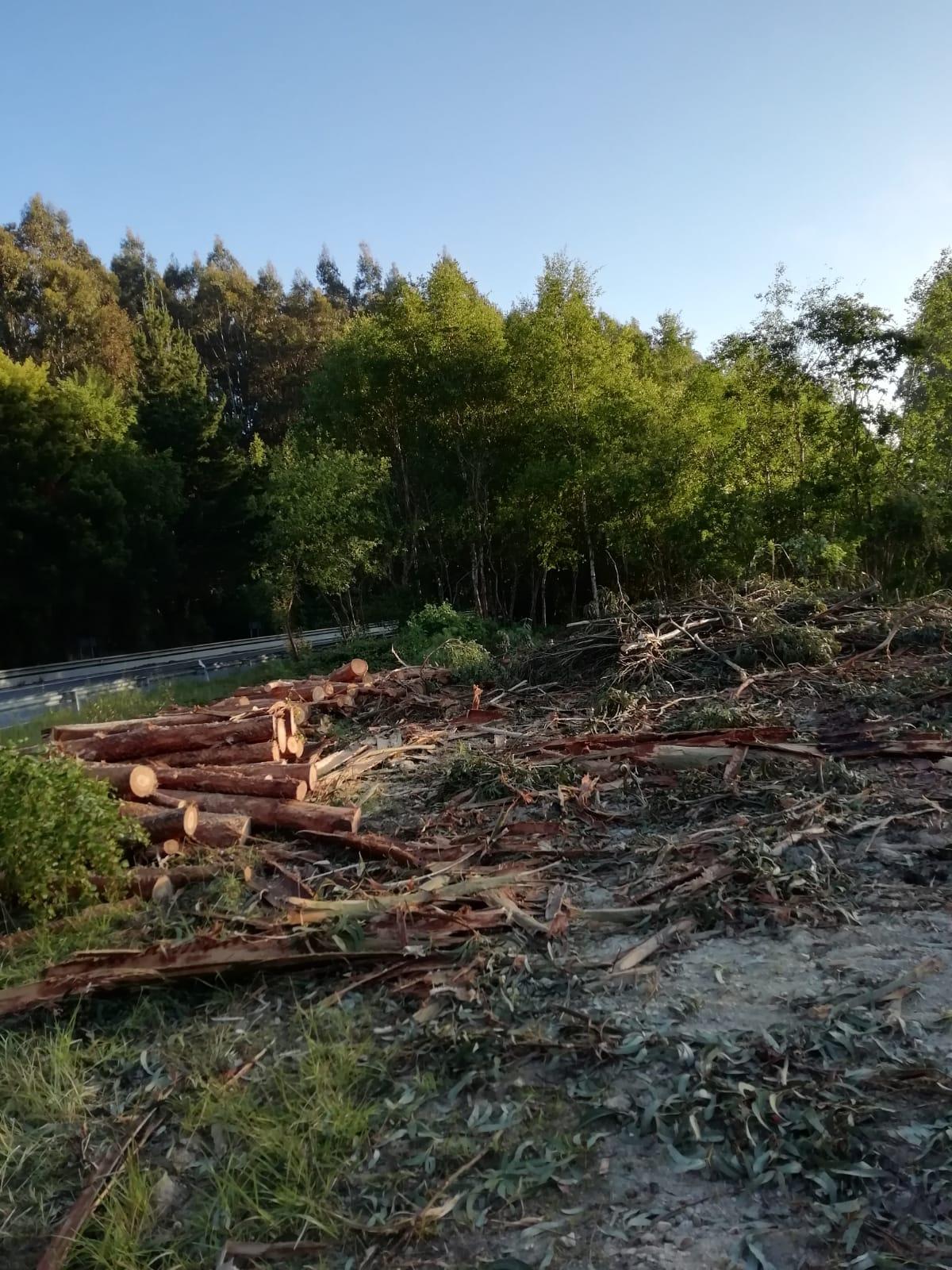El Concello de Ribadeo recupera el paisaje de la ría de Ribadeo con el Life Fluvial