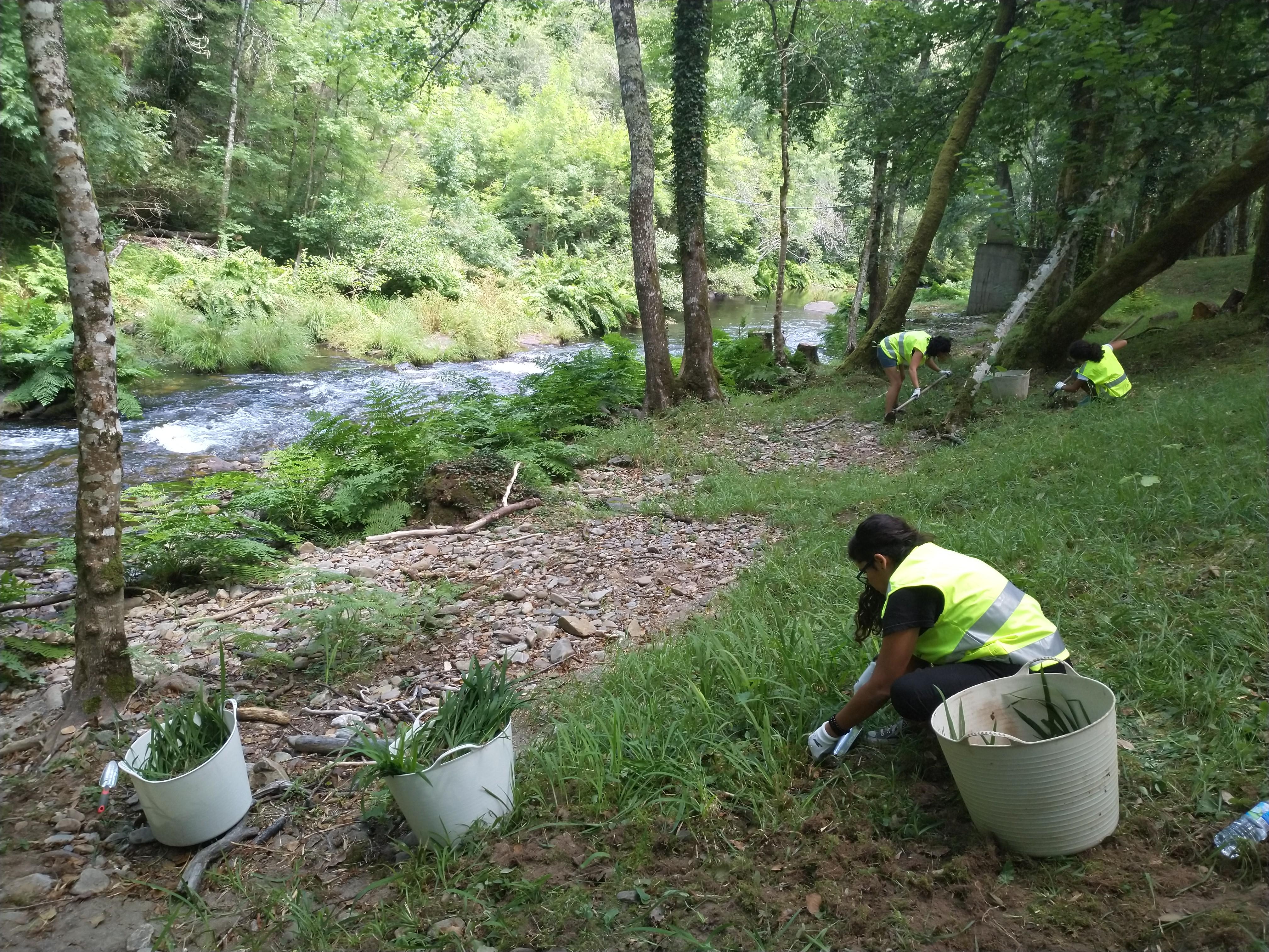 Éxito en la jornada de voluntariado ambiental en el río Eo