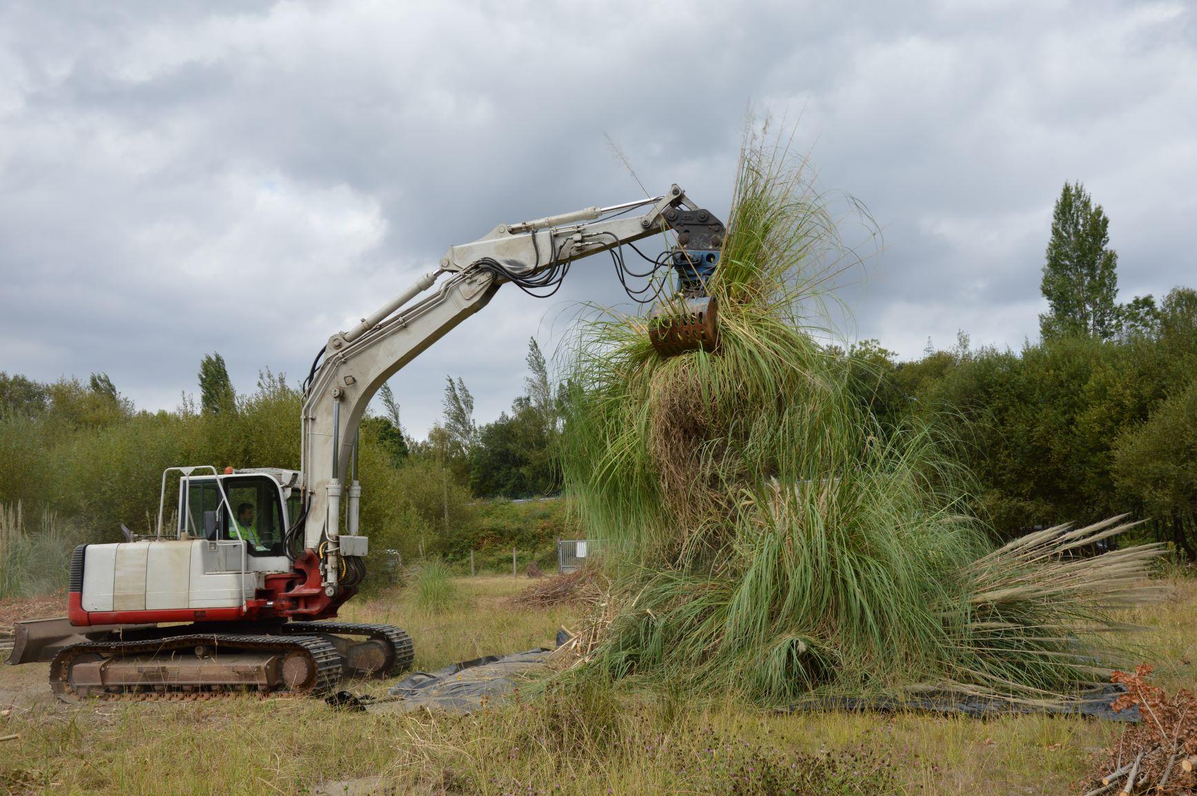 Se inician los trabajos de restauración de la acción de conservación C4 en la ría de Betanzos